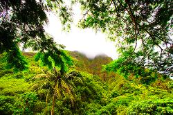 Hawaii, park, mist, clouds, trees, palms