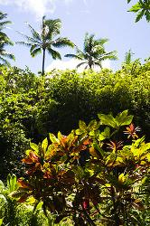 Hawaii, Maui, foliage, trees, palms, Hana Road,