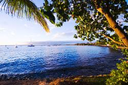 Hawaii, Maui, Lahaina, sea, shore, palm, tree, boats, sunset